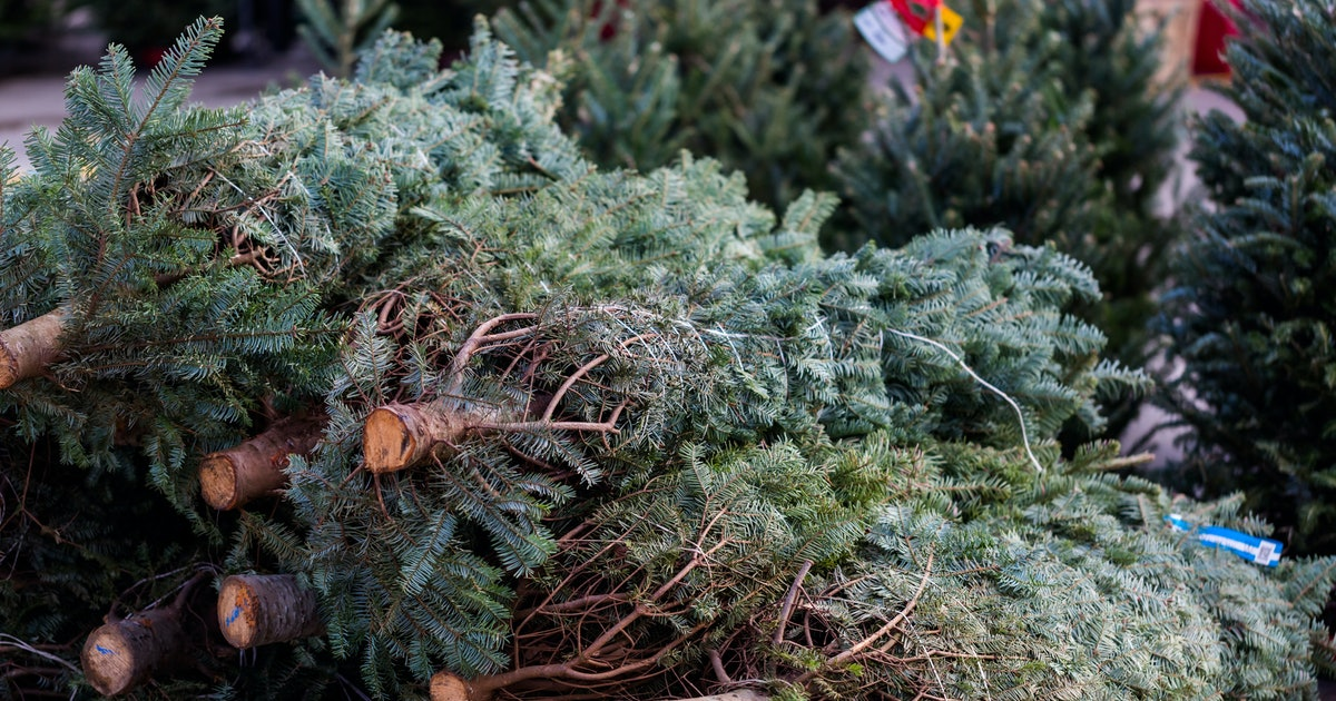 How Long Will Your Christmas Tree Live So You Can Avoid A