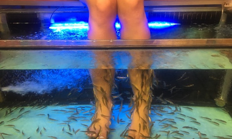 What does a fish pedicure feel like i got one so you don for Fish eating dead skin spa
