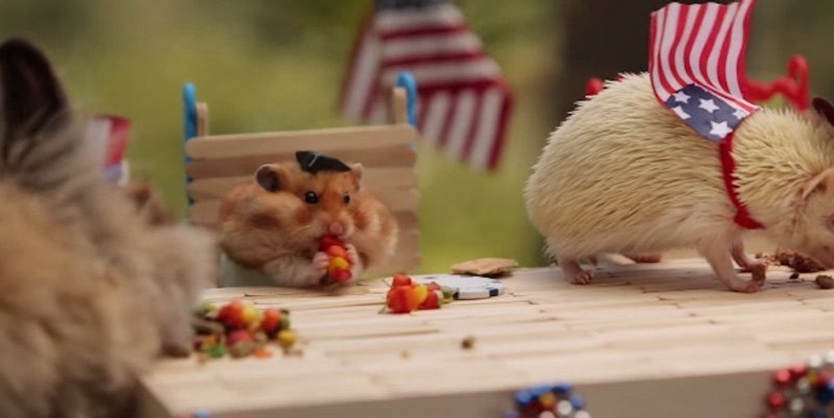 Go Go Pets The 10 batterypowered hamsters that are this