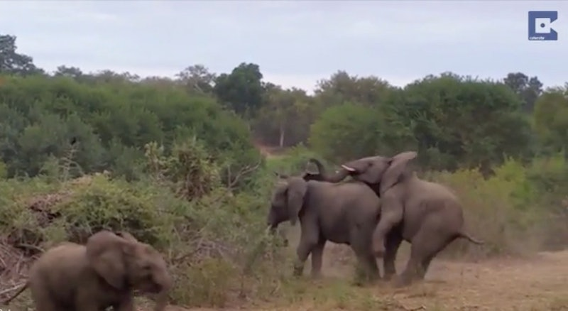 Pictures of elephants having sex hot girl porn