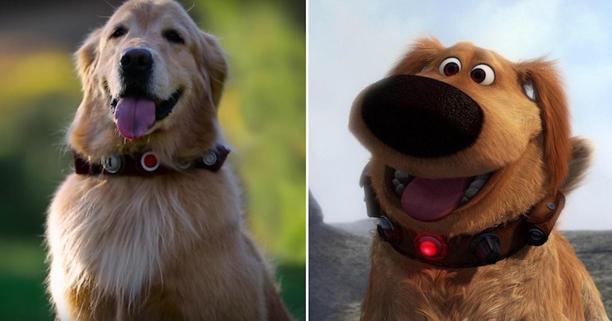 Dug Dog Collar