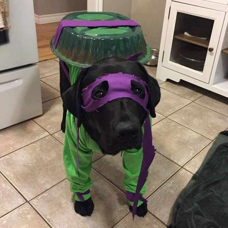 : epic dog costumes  - Germanpascual.Com