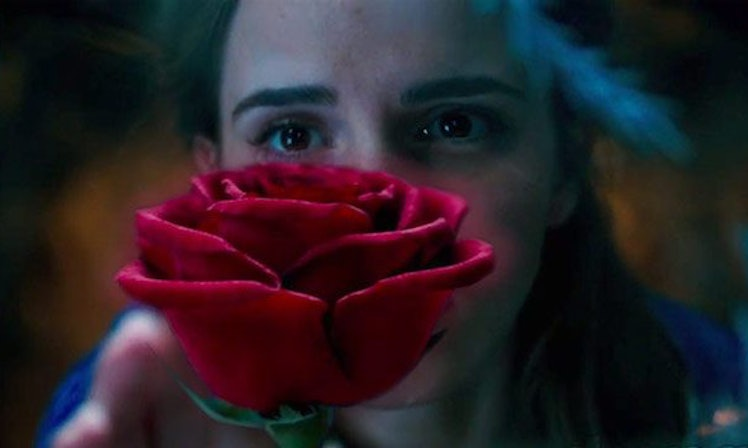 The 39 Beauty And The Beast 39 Rose Exists Irl