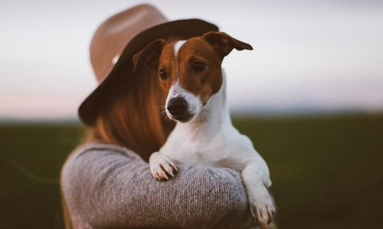 társkereső ingyenes kutyával agence meeting profi