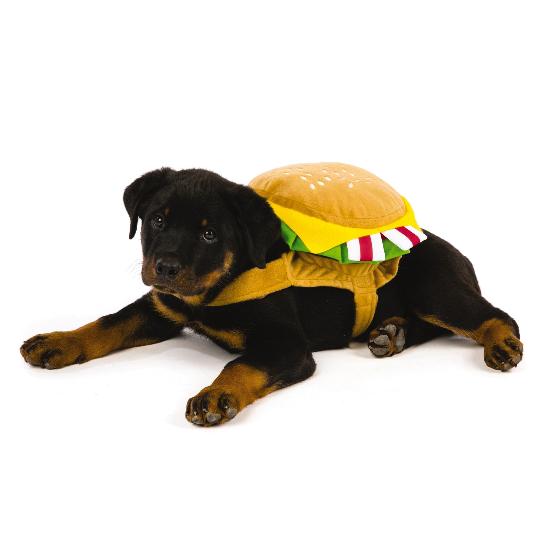 20 Pet Halloween Costume Ideas That Will Make Your Heart Melt From