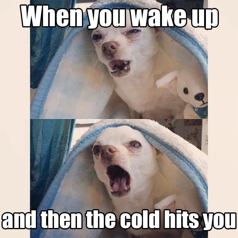 b6540f50 a75b 0134 ce83 0aec1efe63a9 13 first day of winter memes that will help cure those seasonal blues