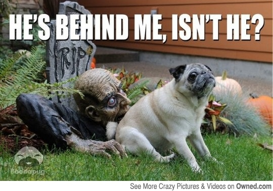 12 Funny Halloween Memes That Will Make You Laugh Out Loud
