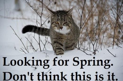 Image result for cat spring meme