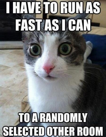 bf3cace0 7ddb 0134 ce13 0aec1efe63a9 14 cat memes that will help you celebrate the best day of the year