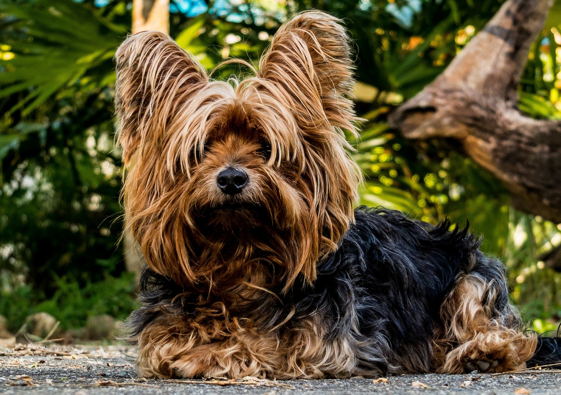 The 7 Best Dog Breeds For Fighting Depression