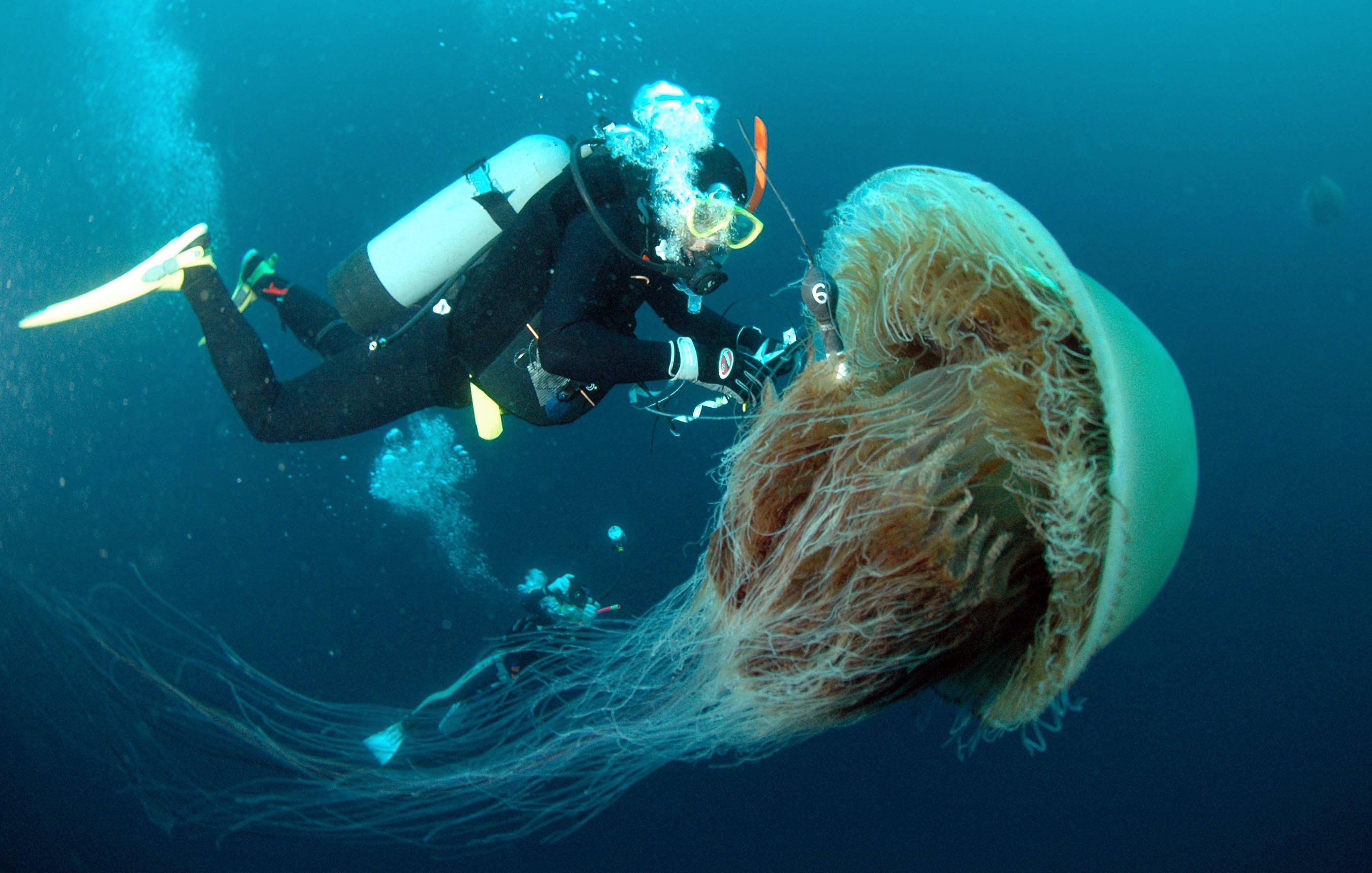 8 times jellyfish were the absolute scariest creatures on earth