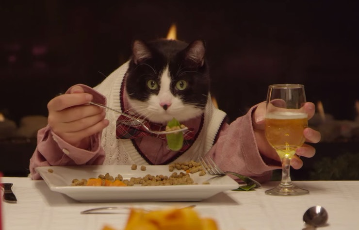 Best Dog Food For Labs >> Here Are Some Cats and Dogs Eating a Holiday Feast With Human Hands (Yup, It's Happening) — VIDEO
