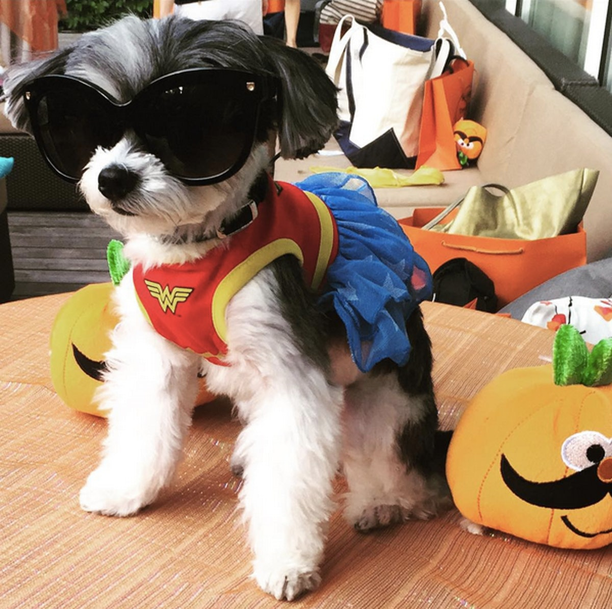 20 Pet Halloween Costume Ideas That Will Make Your Heart ...