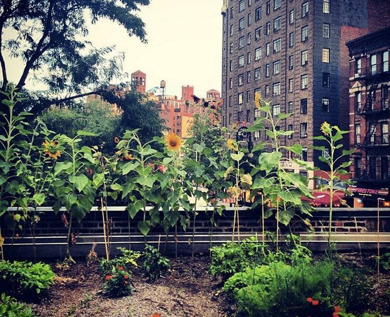 5 Best Rooftop Gardens In New York City, Because Farm To Table Dining Is A  Trend Thatu0027s Here To Stay