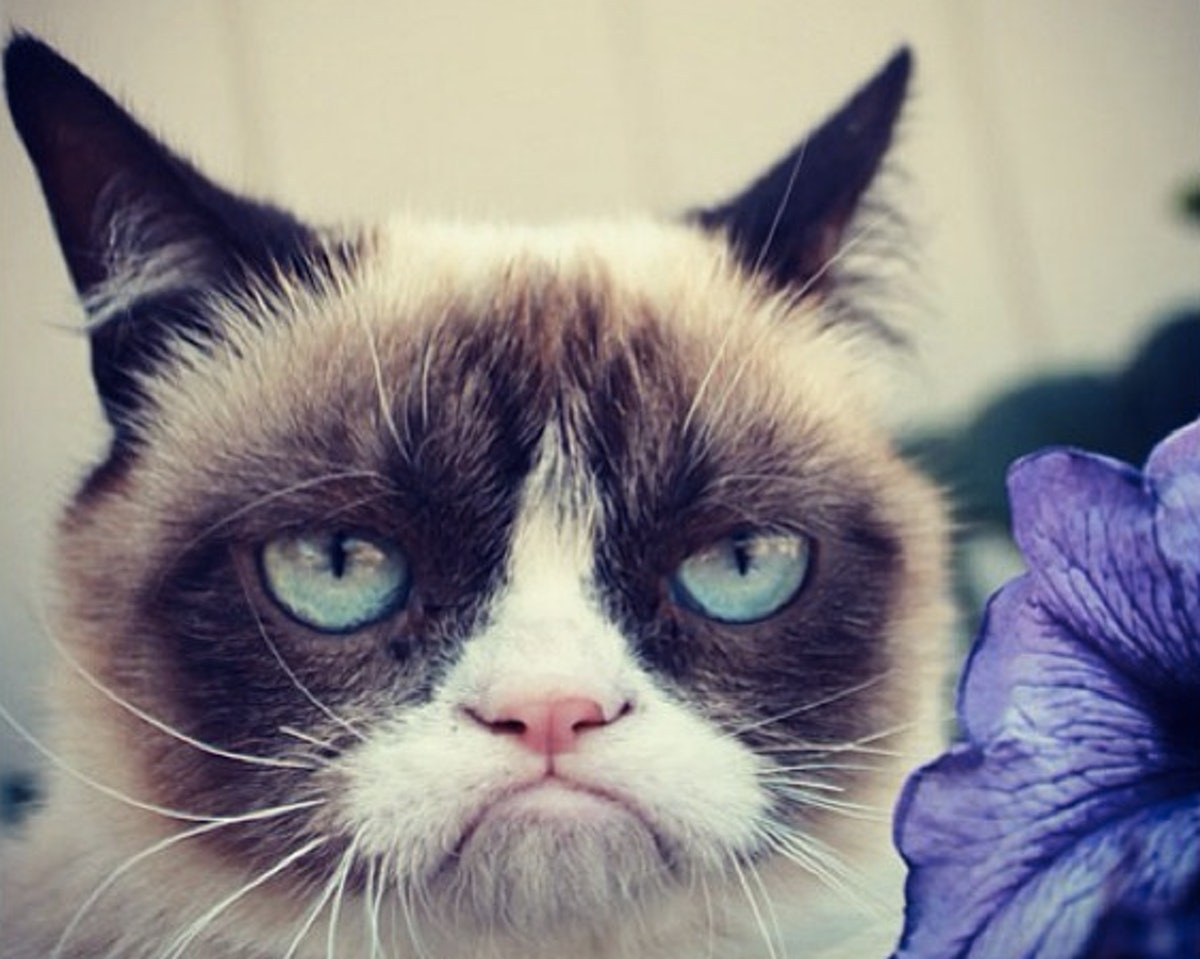 news anchor interviews grumpy cat goes completely hysterical