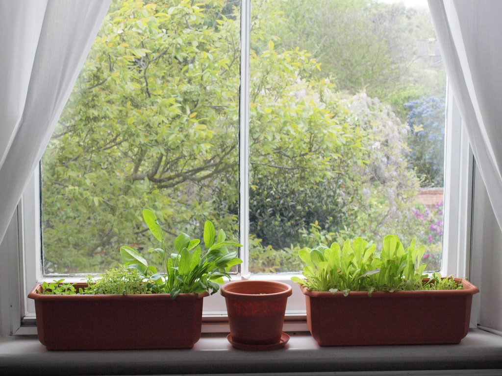 The 3 Best Herbs For Windowsill Gardens, Because Even College Students  Canu0027t Screw These Up Too Badly