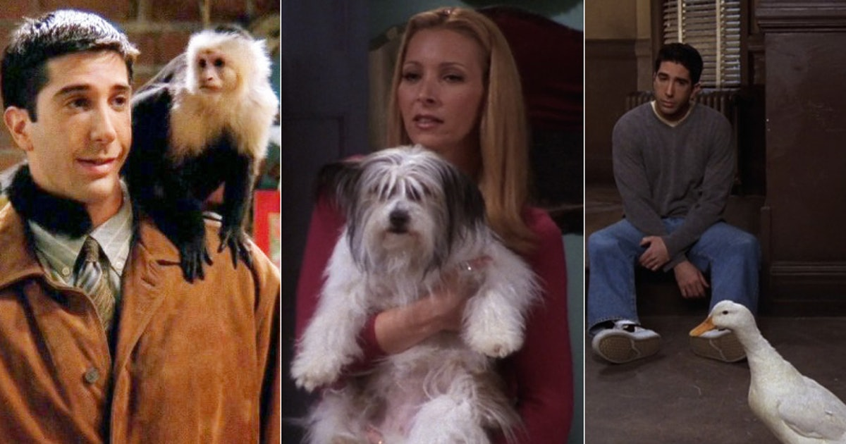 Ranking Every Animal On 'Friends,' From Marcel The Monkey ...