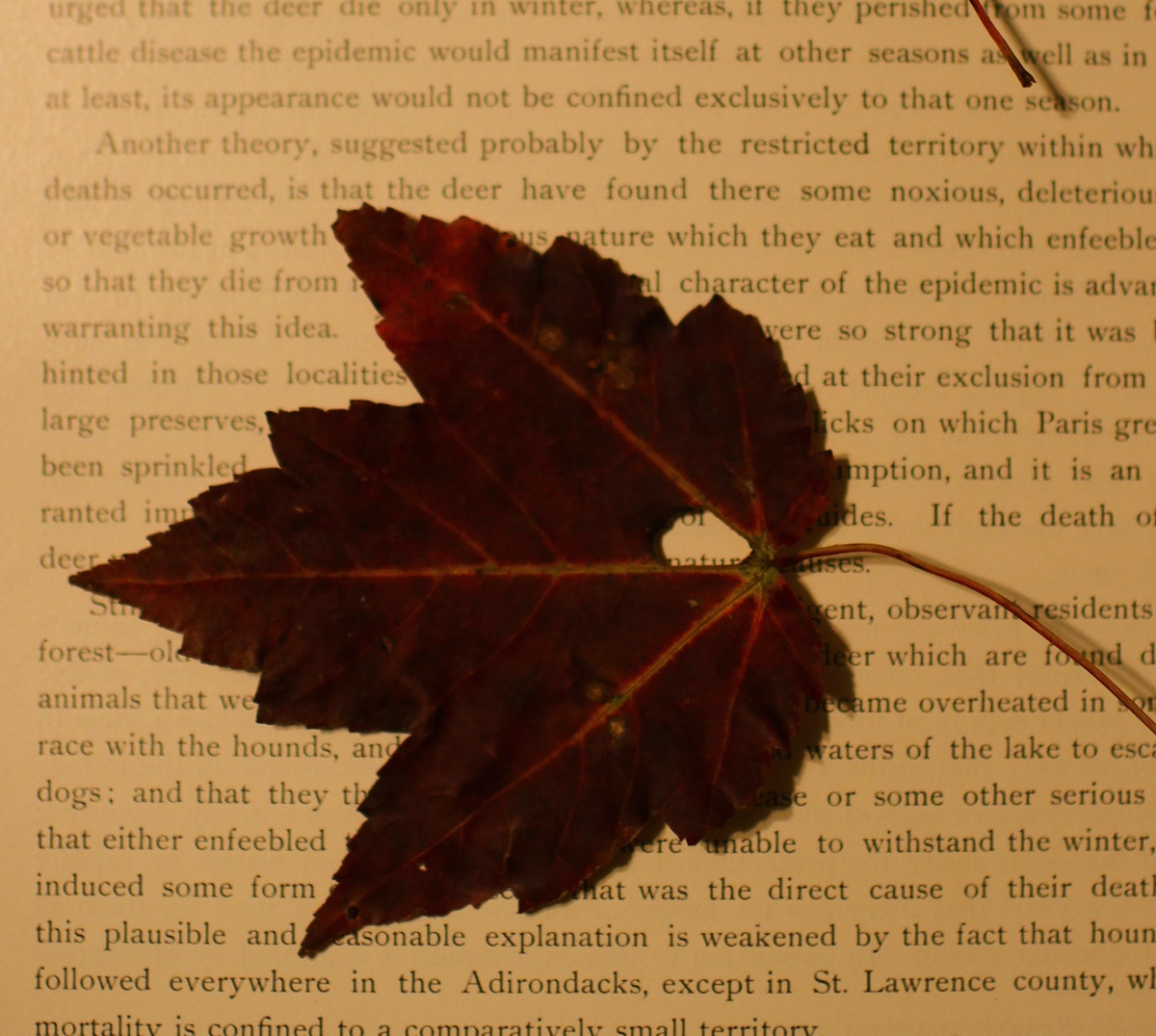 8 Reasons Why Fall Is The Best Time Of The Year For Book Nerds
