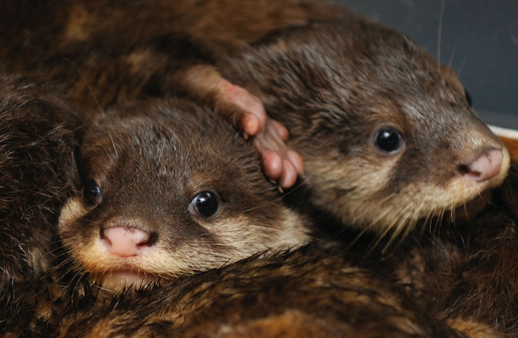 14 baby otters doing cute baby otter things because life