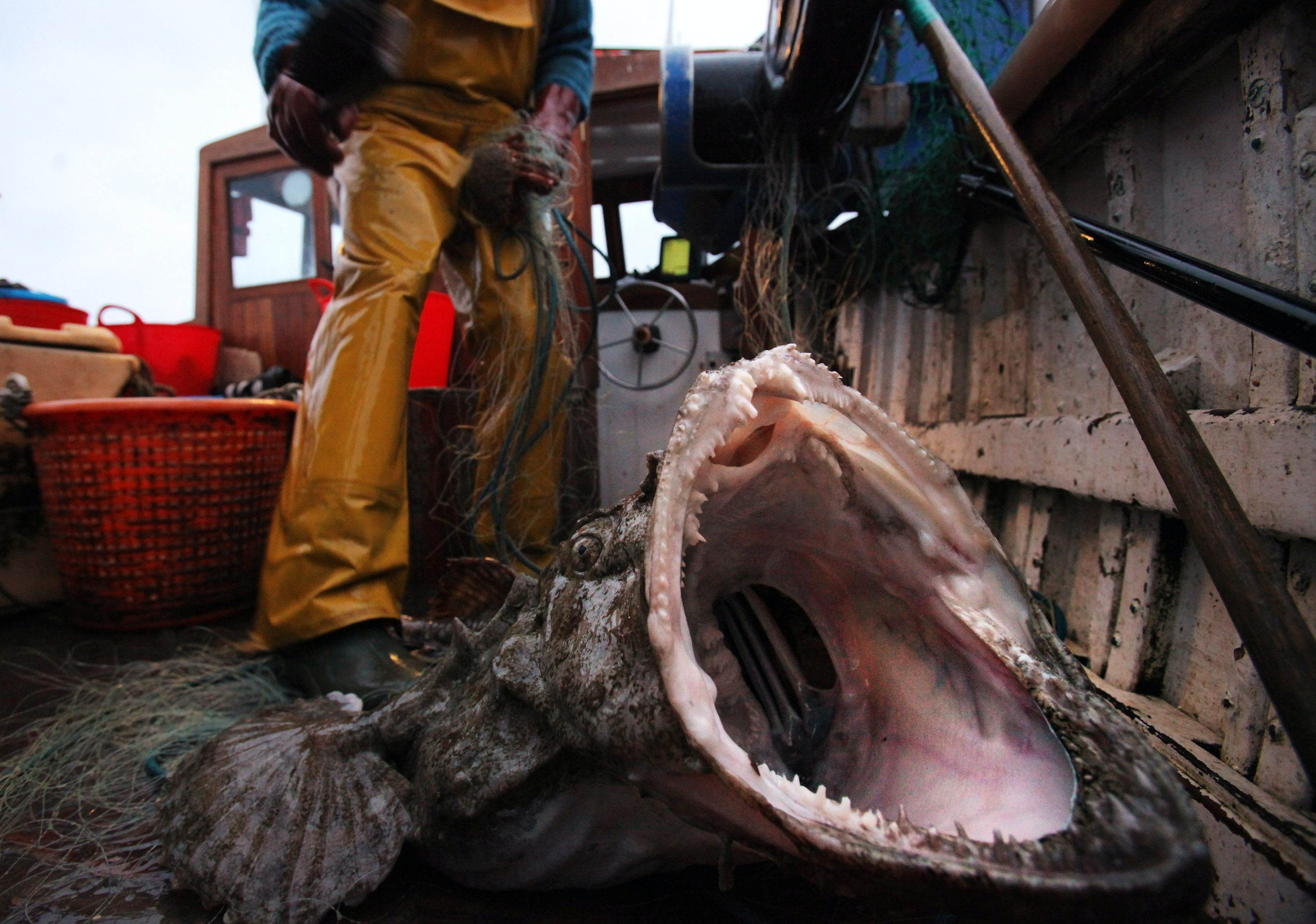 15 Terrifying Things In The Ocean, Because 'Jaws' Has Nothing On ...