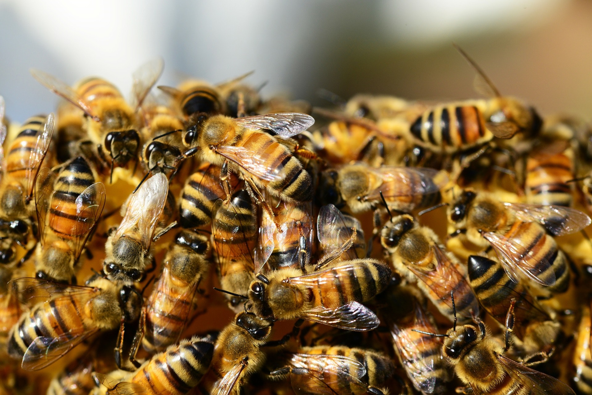 why is this car covered in bees here u0027s the science behind the