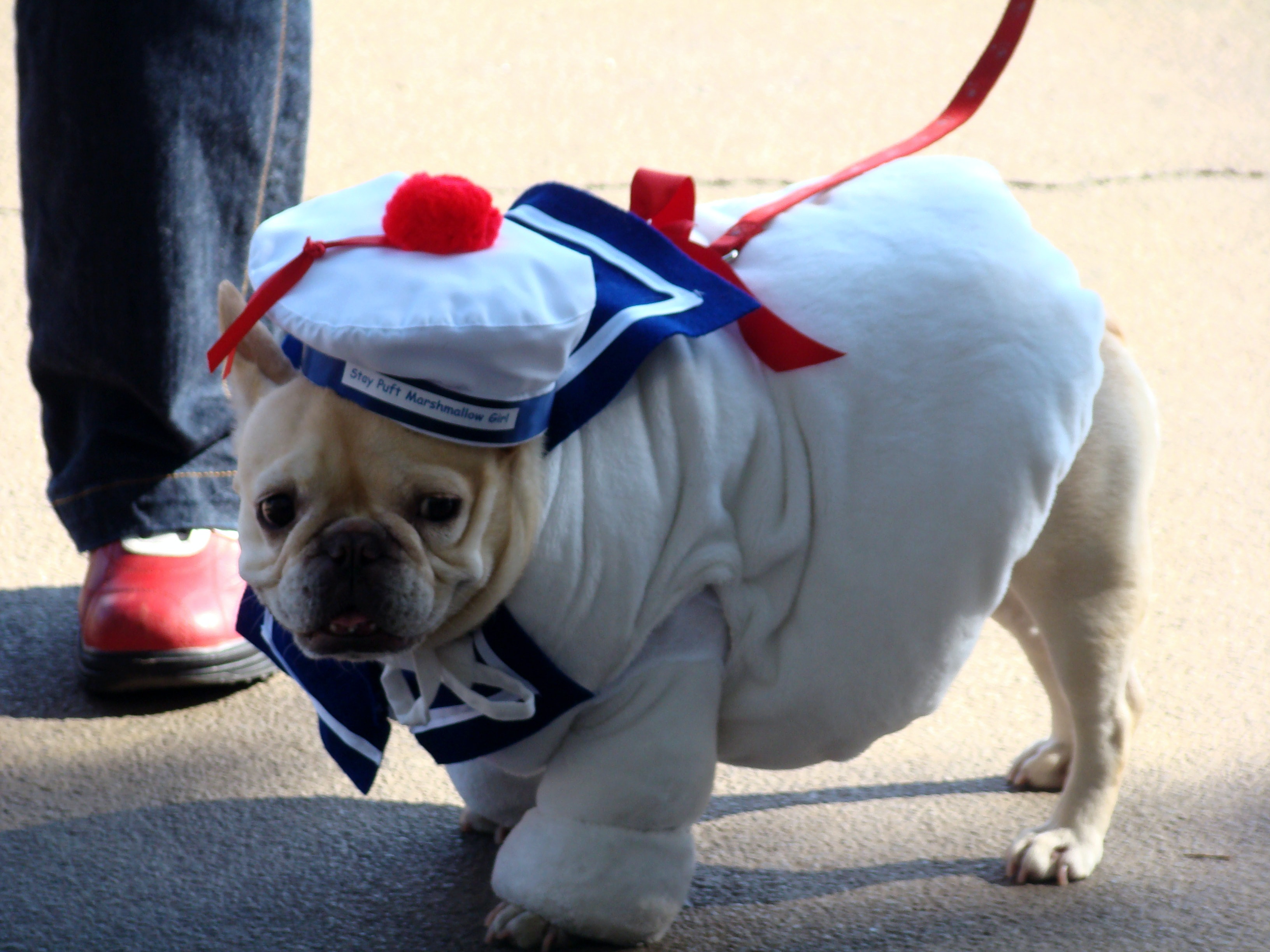 21 Dog Halloween Costume Ideas, Including But Not Limited To The ...