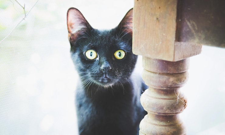 Why Are Black Cats A Halloween Symbol? Here's The History Behind ...