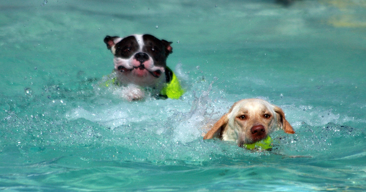 Happy Tails Resort 39 S Dog Pool Party Is Amazing And We Want An Invite