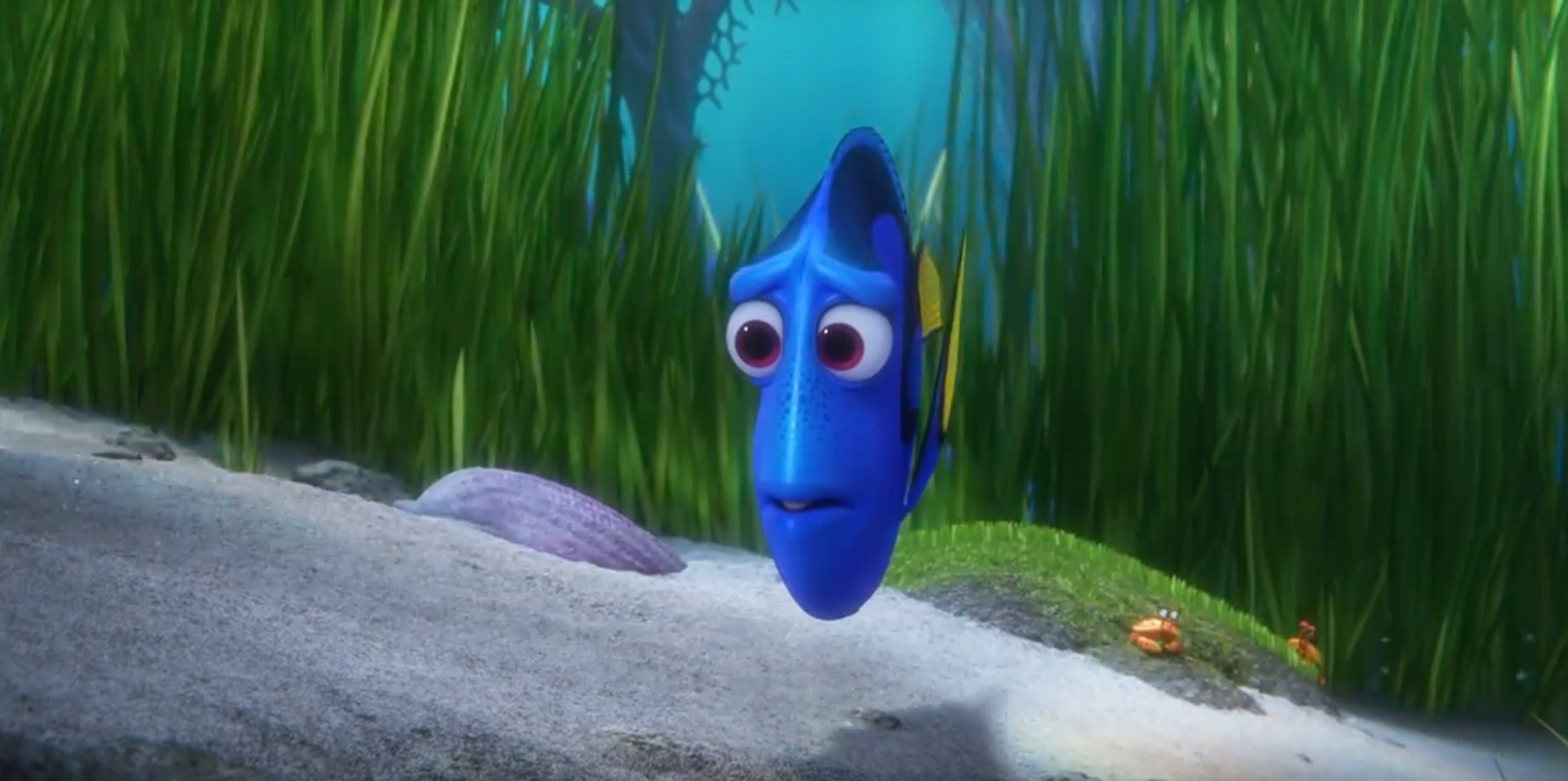 Royal blue tang fish dory the image kid for What kind of fish does captain d s use