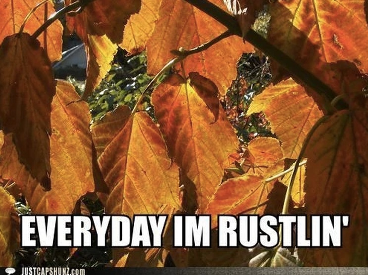 7c1495f1 a56a 4b44 aab9 f7b5717a1916?w=970&h=582&fit=crop&crop=faces&auto=format&q=70 14 fall memes so you can usher in the greatest season of them all