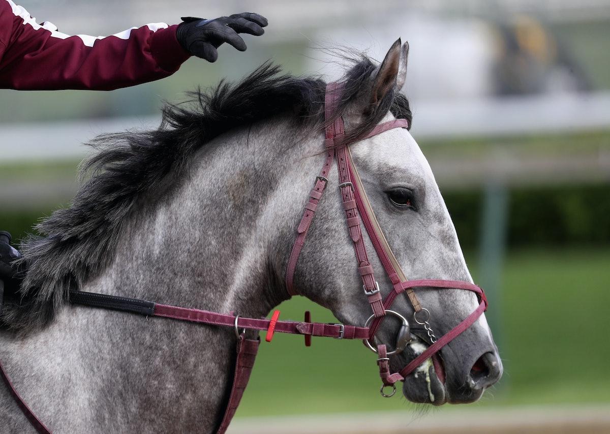 Q Horse Names 13 Kentucky Derby Hors...