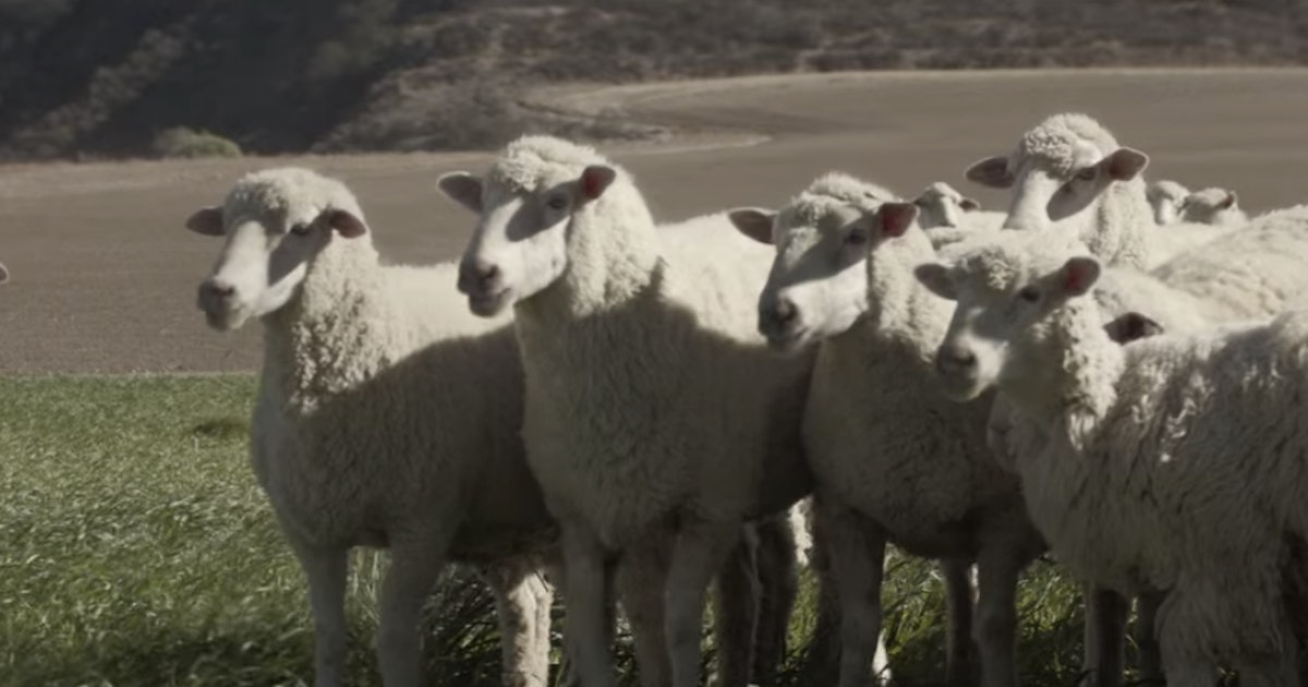 the song that the sheep sing in honda 39 s super bowl ad is. Black Bedroom Furniture Sets. Home Design Ideas