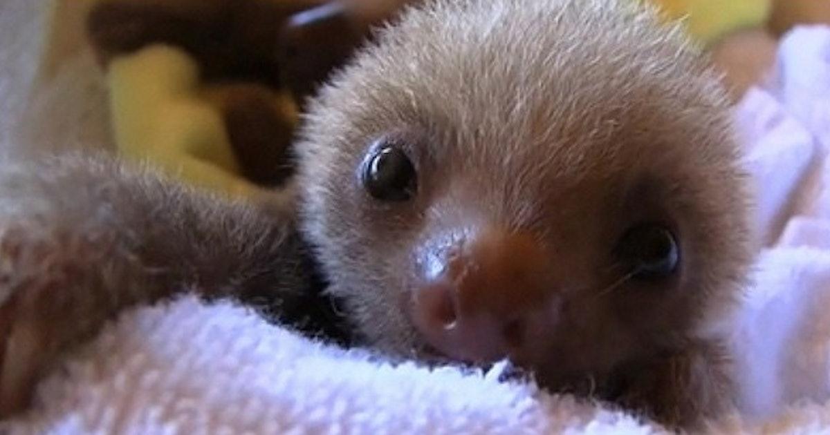 Cute sloth tumblr
