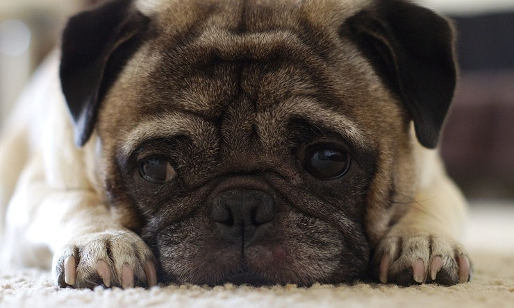 Ptsd Dog Breeds