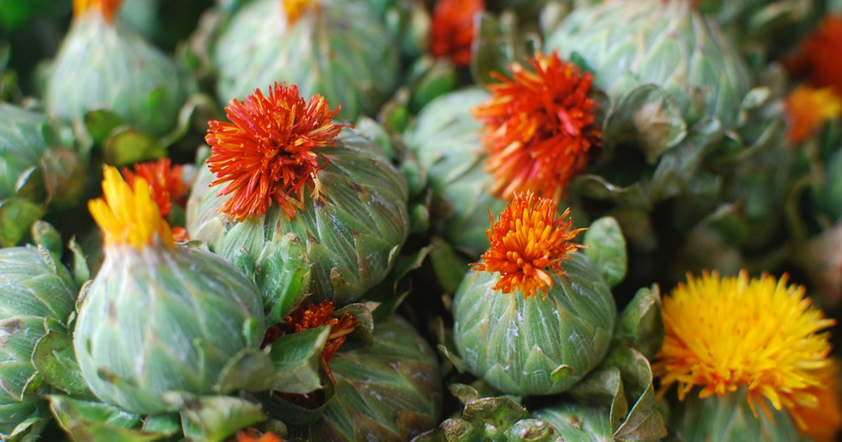 Benefits Of Safflower Oil For Natural Hair