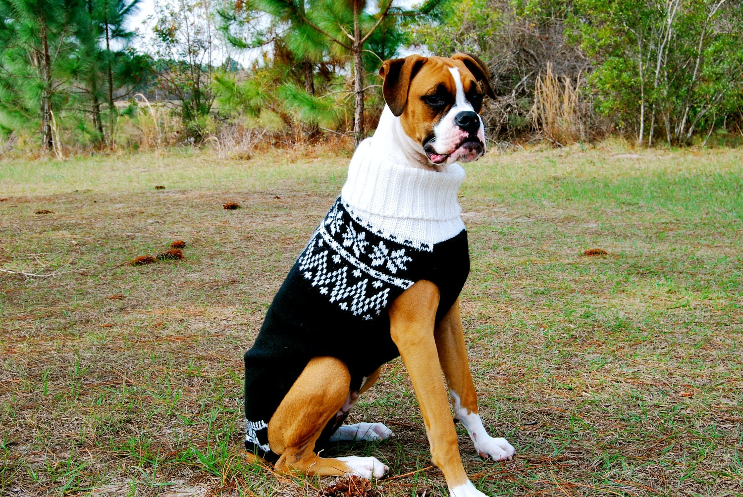 Snow Coats For Large Dogs Wwwtopsimagescom