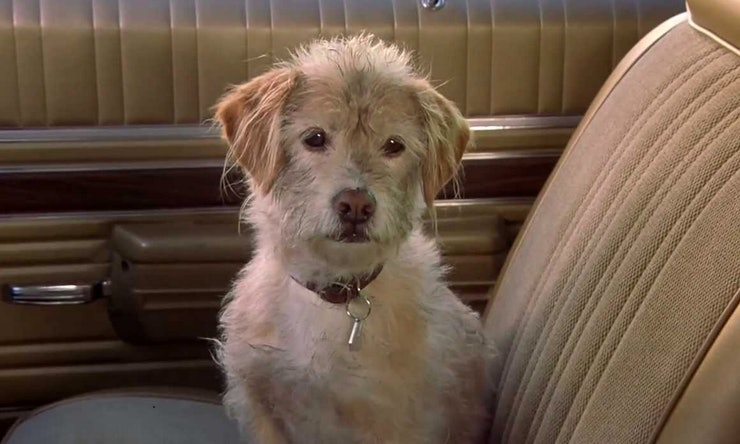 What Kind Of Dog Is Baxter From Anchorman