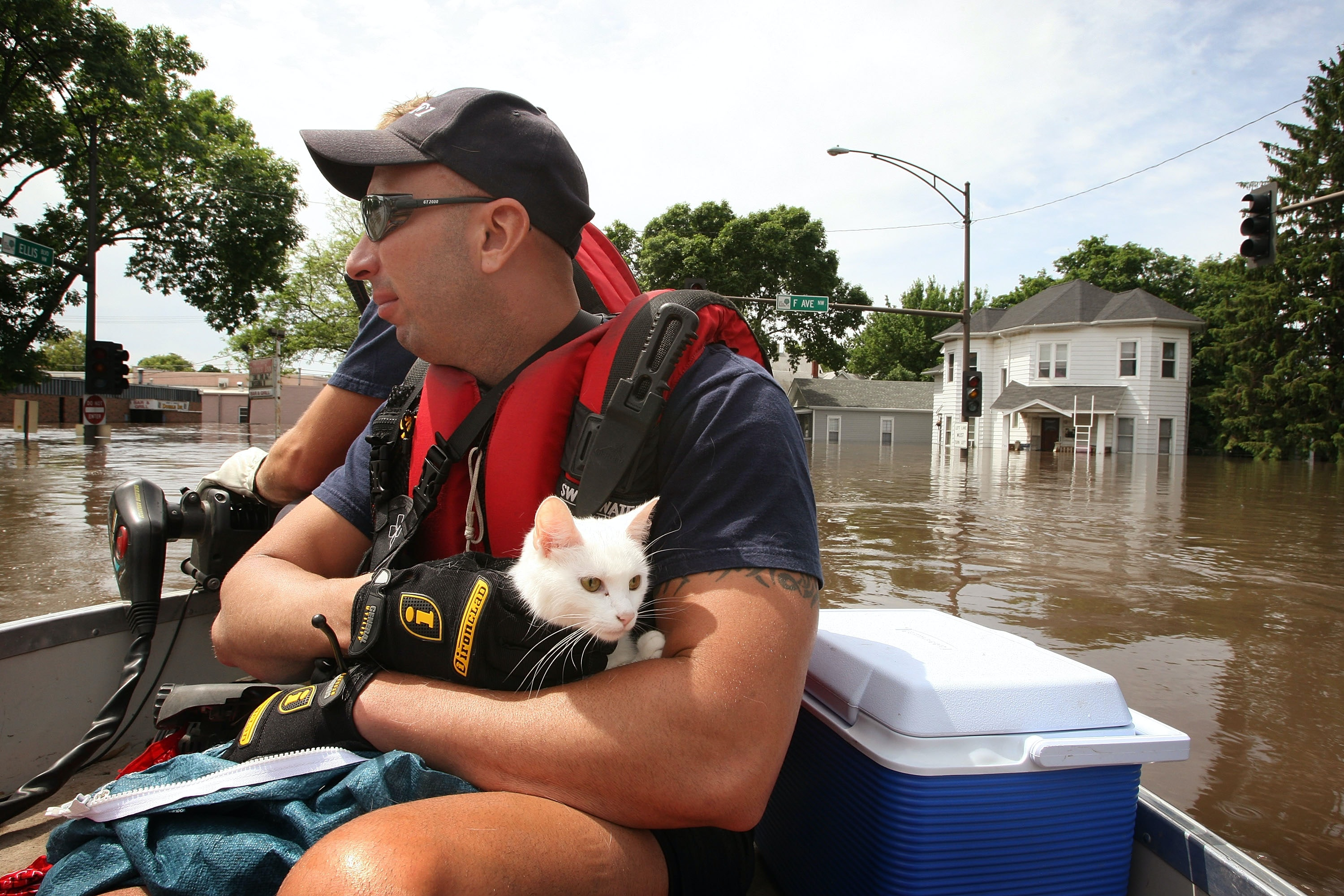 How To Help Stray Animals Survive Hurricane Harvey - Some people tied their dogs up and left them to die during the flood
