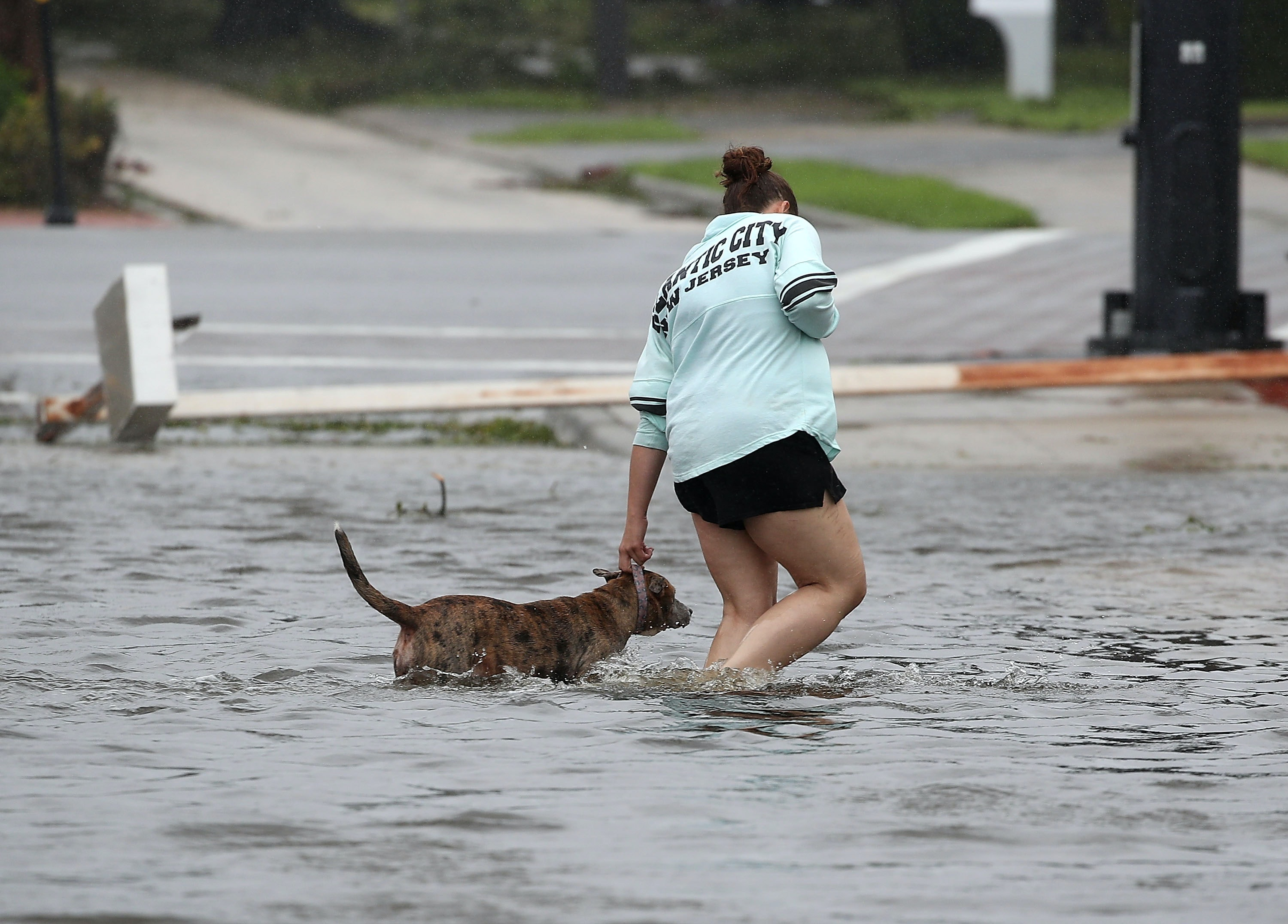 Local shelter will be taking in displaced dogs from Harvey