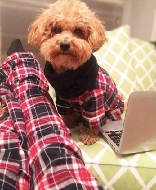 These Matching Holiday Dog Owner Pajamas Are The Cutest Thing To Hen In History Of Instagram