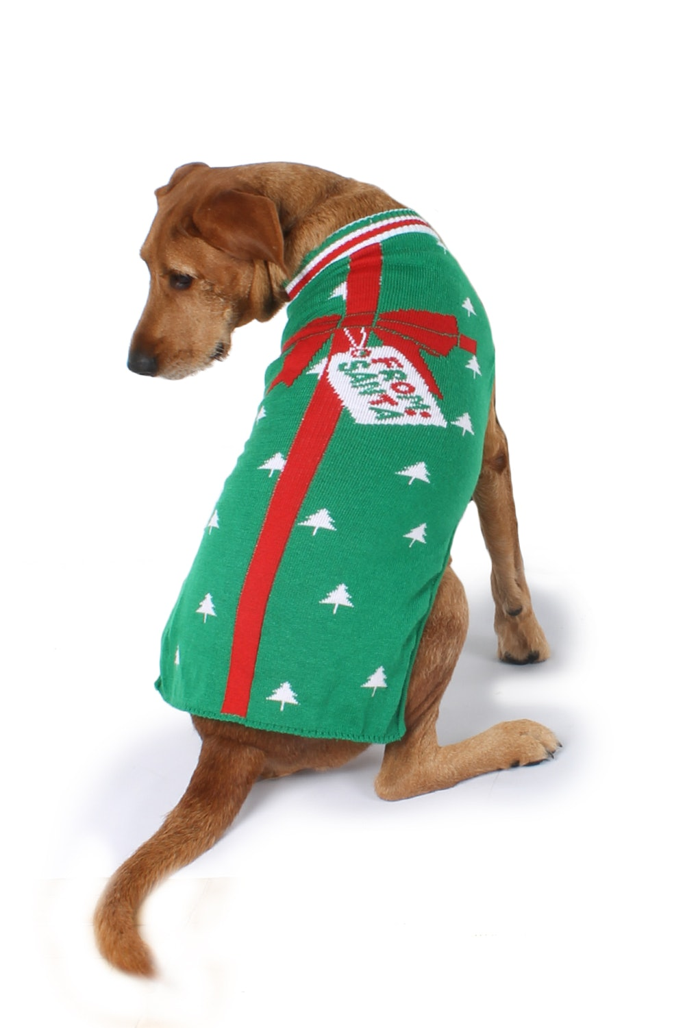 5 Matching Christmas Sweaters For Dogs Owners That Are Pawfect For
