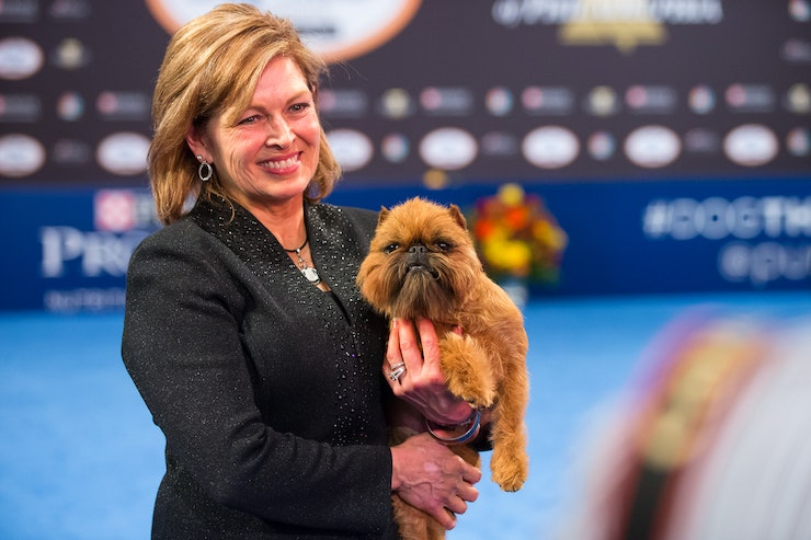 National Dog Show Brussels Griffon >> The 2017 National Dog Show Winner Is Here & He Looks Like A Tiny Chewbacca
