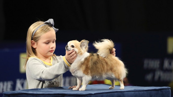 Dog Show After The Thanksgiving Parade