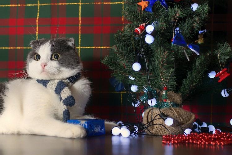 Fluffy Christmas Tree
