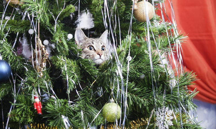 15 Cats In Christmas Trees Who Are Seriously On Santa's ...