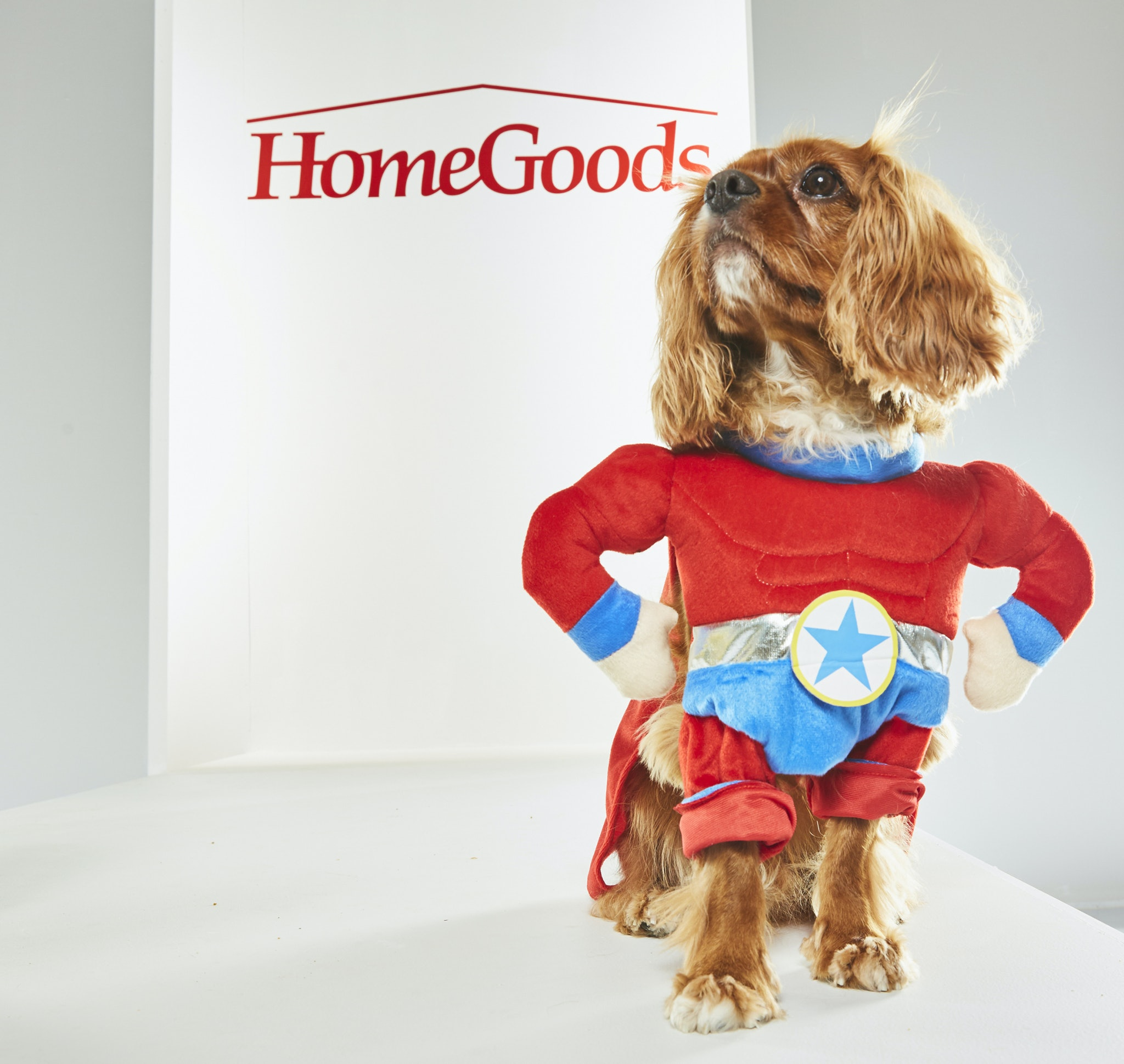 10 halloween costume ideas for kids & their pets that you'll be