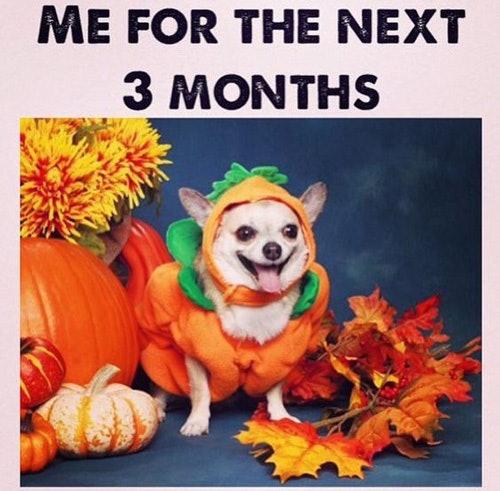 Image result for fall meme