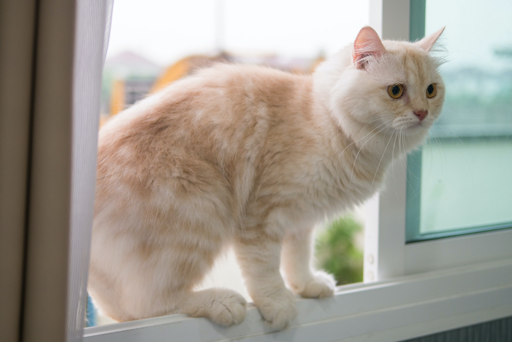 Crazy Cat Lady Internet Hookup Video Introduction