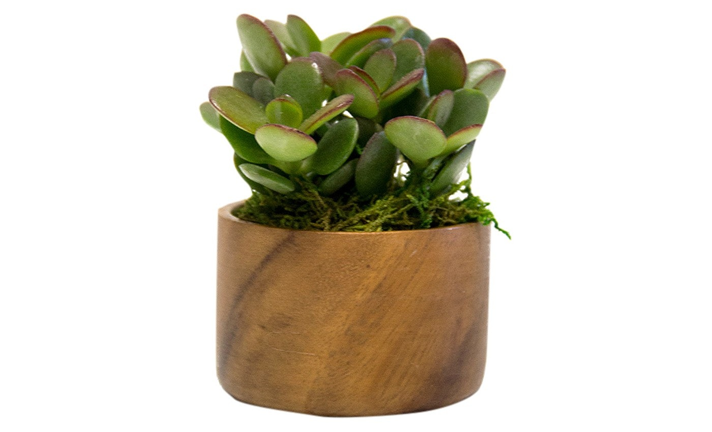 13 Plants You Can Buy From Target