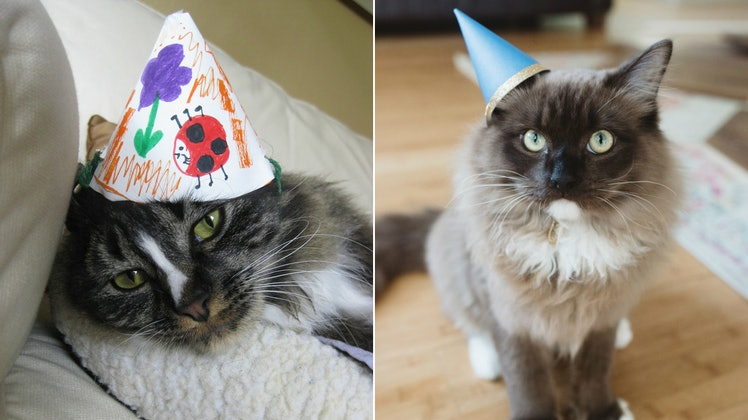 Instagram Captions for a Birthday Cat